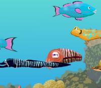 Balıkları Bul