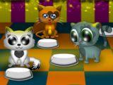 Kedi Lokantası