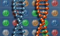 DNA Patlatma